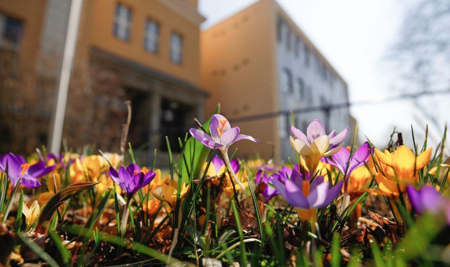 Wir wünschen allen Schüler*innen, Eltern und Lehrer*innen schöne und erholsame Osterferien!